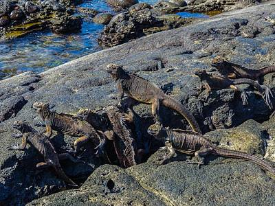 Photograph - Santiago Marine Iguanas by Harry Strharsky