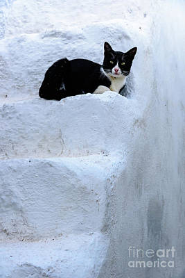 Photograph - Santorini Cat On The White Stairs Of Oia, Santorini, Greece by Global Light Photography - Nicole Leffer