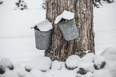 Maple Syrup Photograph - Sap Buckets by Robert Clifford