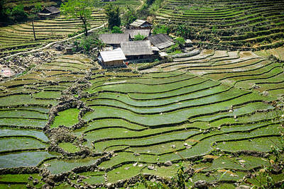 Photograph - Sapa Rice Fields by Michelle Lee