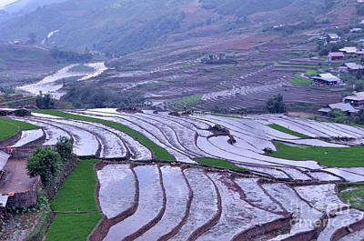 Photograph - Sapa Rice Paddies by Josephine Cohn