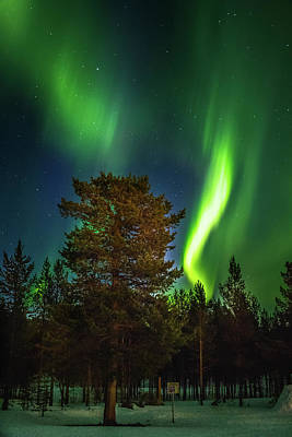Photograph - Sapmi Park Tree Under The Northern Lights Karasjok Norway by Adam Rainoff