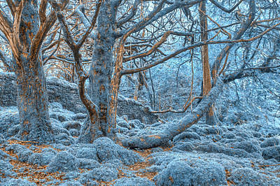 Photograph - Sapphire Forest by Nicolas Raymond