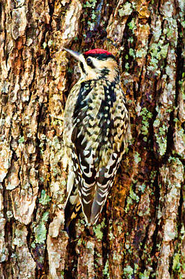 Sapsucker Wall Art - Digital Art - Sapsucker by Paul Bartoszek