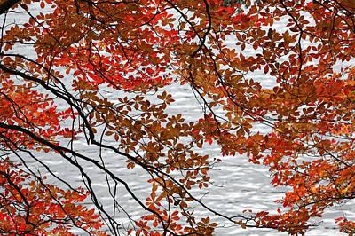 The Autumnal Tints Of The Japanese Enkianthus. Original by IGUCHI Yasunori