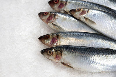 Fish Food Photograph - Sardines On Ice by Jane Rix