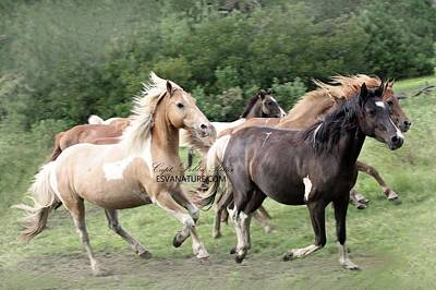 Photograph - Sarry Whisper by Captain Debbie Ritter