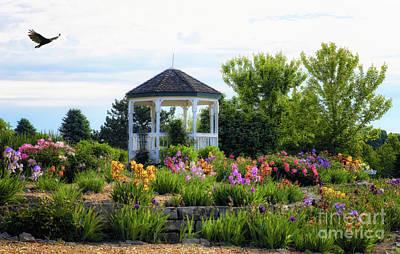 Photograph - Sass Memorial Iris Garden by Elizabeth Winter