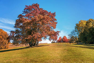 Photograph - Sassafras Tree At Sioux Park 2 7r2_dsc2536_10232017 by Greg Kluempers