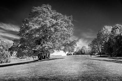 Photograph - Sassafras Tree At Sioux Park Black And White 7r2_dsc2536_10232017 by Greg Kluempers