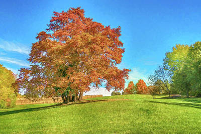 Photograph - Sassafras Tree At Sioux Passage Park Photo Painting 1-7r2_dsc2536_10232017 by Greg Kluempers
