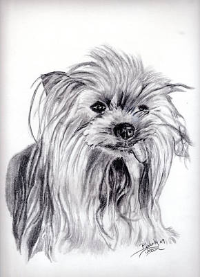 Drawing - Yorkie Lady by Beverly Johnson