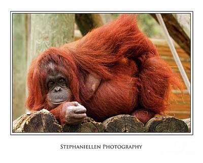 Sassy Orangutan Art Print