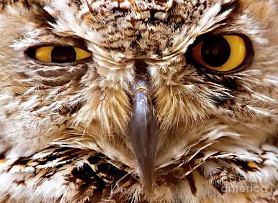 Pasta Al Dente - Sassy Owl by Bill Frische
