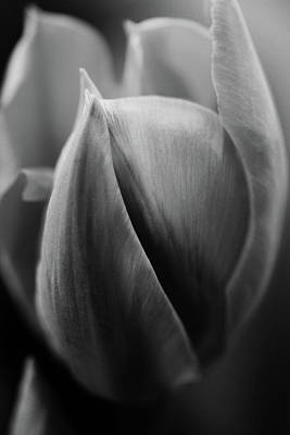 Photograph - Satin by Connie Handscomb