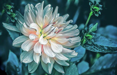Photograph - Satin Evening Dahlia by Julie Palencia