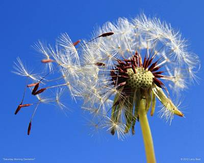 Photograph - Saturday Morning Dandelion by Larry Beat