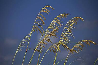 Photograph - Saturday Sway by Michiale Schneider