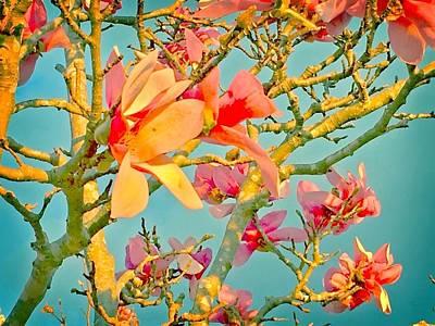 Photograph - Saucer Magnolia by Angela Annas