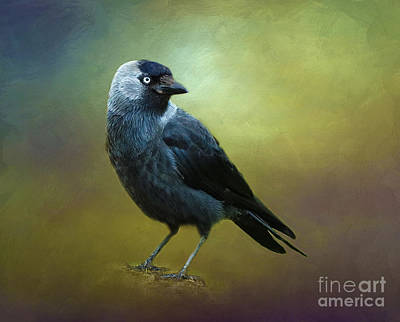 Photograph - Saucy Jackdaw by Judi Bagwell