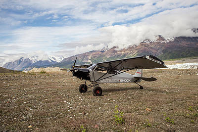 Photograph - Savage Shock Cub by Fred Denner