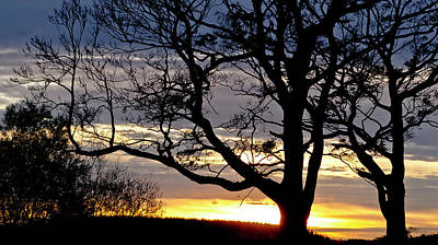 Photograph - Savanna Sunset In Scottish Vale by Elena Perelman