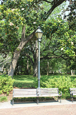 Photograph - Savannah Bench With Lamppost And Magnolias by Carol Groenen