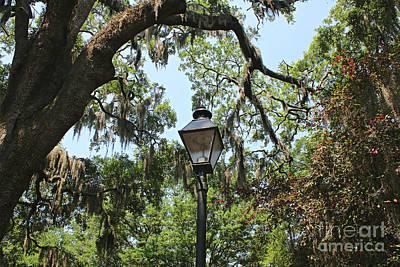 Photograph - Savannah Lamppost With Live Oak by Carol Groenen