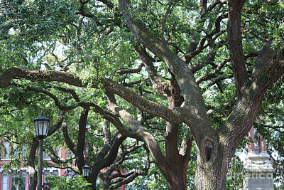 Photograph - Savannah Live Oak Perspective 2 by Carol Groenen