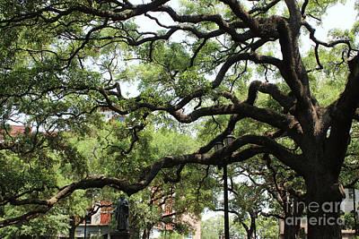 Savannah Live Oaks Photograph - Savannah Park Tree by Carol Groenen