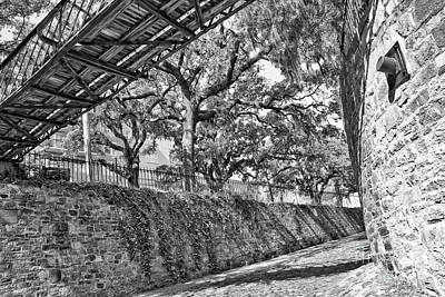 Photograph - Savannah Perspective - Black And White by Carol Groenen