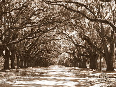 Savannah Dreamy Photograph - Savannah Sepia - Glorious Oaks by Carol Groenen