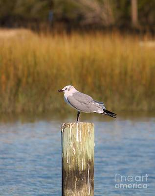 Photograph - Savannah Shore Bird by Keri West