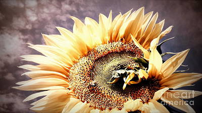 Photograph - Savannah Skies - Sunflower  by Janine Riley