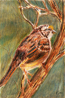 Painting - Savannah Sparrow by Barry Jones