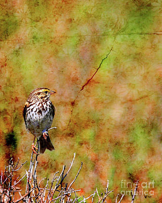 Photograph - Savannah Sparrow . Texture . 40d5883 by Wingsdomain Art and Photography