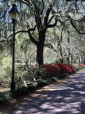 Photograph - Savannah Spring Walk by Carol Groenen