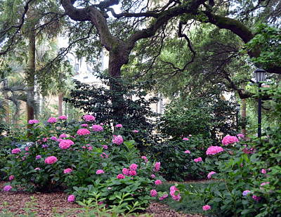Photograph - Savannah Springtime by Carla Parris