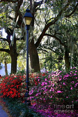 Savannah Street Lamp In Springtime Art Print by Carol Groenen
