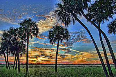 Photograph - Savannah Sunset - Myakka River State Park by HH Photography of Florida