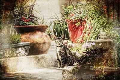 Photograph - Savannah Tabby, Courtyard Garden Savannah Georgia by Melissa Bittinger