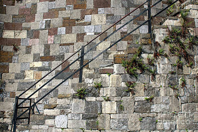 Photograph - Savannah Wall by Carol Groenen