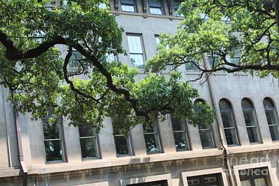 Savannah Live Oaks Photograph - Savannah Windows And Branches by Carol Groenen