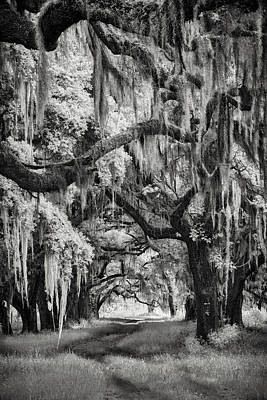Photograph - Savannah's Forest by Jon Glaser