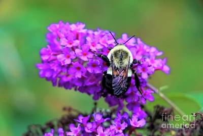 Autumn Photograph - Save The Bees by Elizabeth Dow