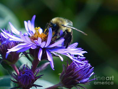 Photograph - Save The Bees by Rosanne Licciardi