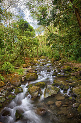 Photograph - Savegre River - Costa Rica 5 by Kathy Adams Clark
