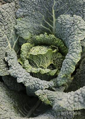 Grocery Store Photograph - Savoy Cabbage In The Vegetable Garden by Carol Groenen