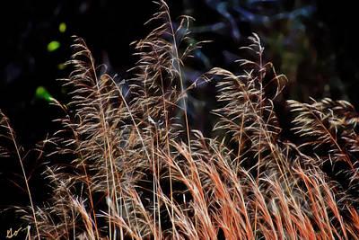 Photograph - Saw Grass by Gina O'Brien