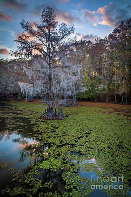 Caddo Lake Photograph - Saw Mill Pond Tree by Inge Johnsson